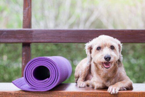 Forebyggende behandling for kjæledyr