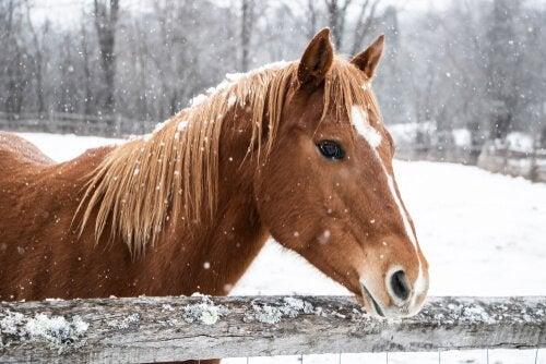 Ta vare på hesten din om vinteren