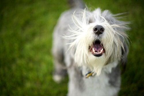 Bjeffehalsbånd for hunder