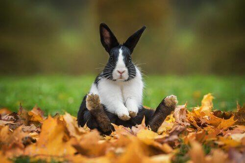 Morsomme og originale navn for kaniner