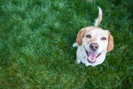 Glad hund ser på eieren med et smil