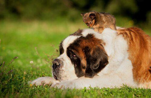 Hund ligger på gress med valp
