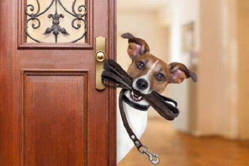 Hund med bånd