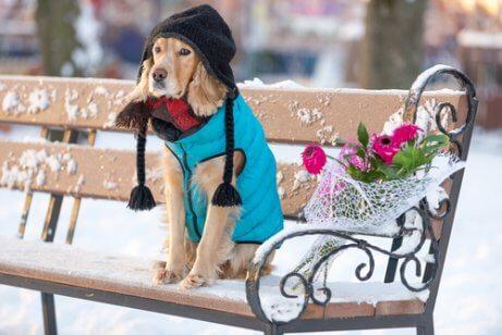 Hund med vinterklær sitter på en snødekt benk