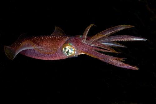 Kamuflasje hos blekkspruter.