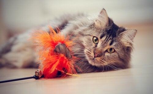 katt leker på gulvet