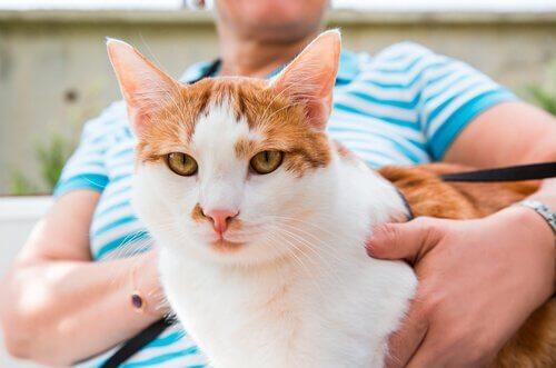 Bilde av katt som sitter på fang.