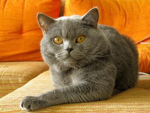 Korrigere uønsket atferd hos katten