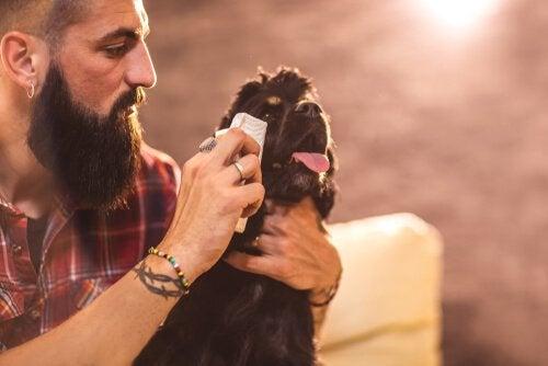 Hvordan rengjøre øynene til hunden