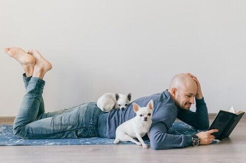 Kjæledyr i miniatyr: den nye kjæledyr-trenden