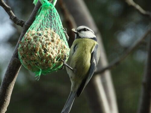 En fugl som spiser noen nøtter