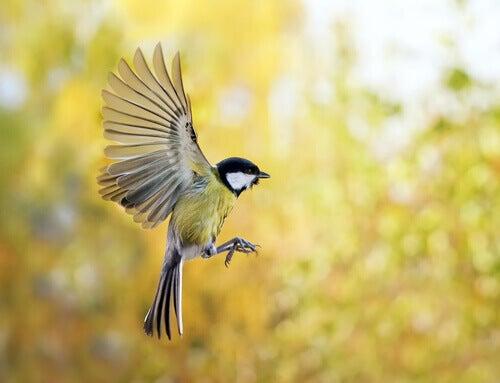 Slik kan du tiltrekke fugler til hagen din