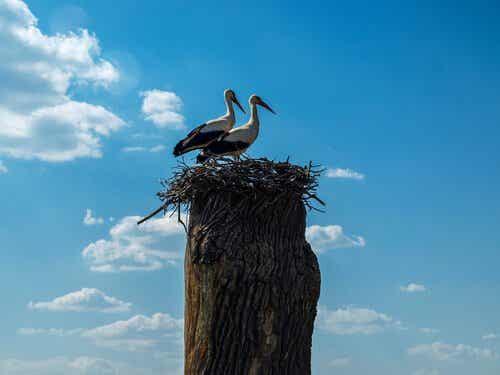 Klepetan og Malena - To fugler som elsker hverandre