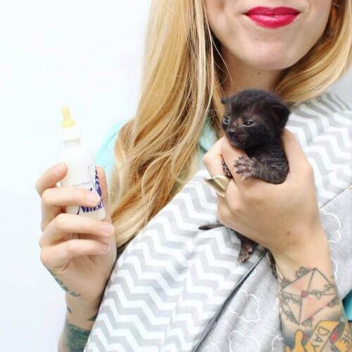 Kitten Lady: Kvinnen som har reddet hundrevis av katter