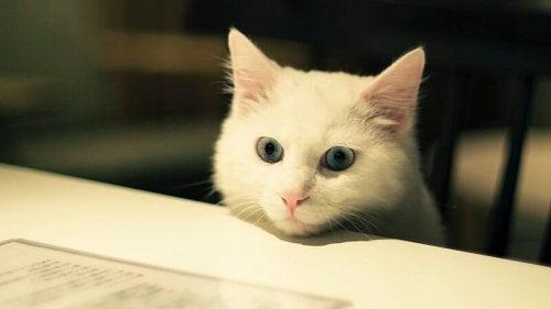 Kjæledyr som er ideelle å ha i leiligheter