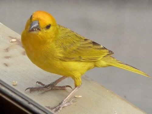 Hvordan vite kjønnet til en fugl