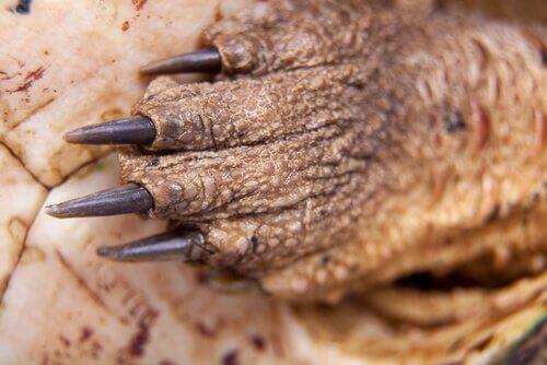 Bilde av hånden til en skilpadde.