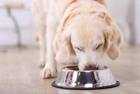 Havremel for hunder er noe hunden din kan nyte å spise, akkurat som denne