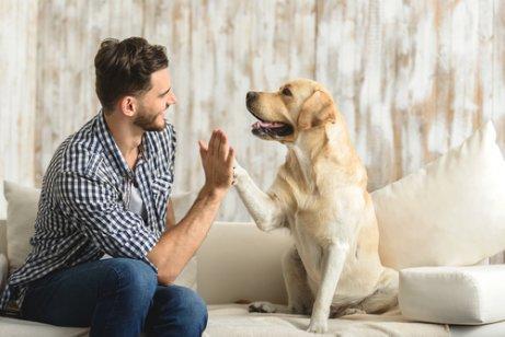 Mann gir en high five til en gul labrador i stedet for å hoppe opp