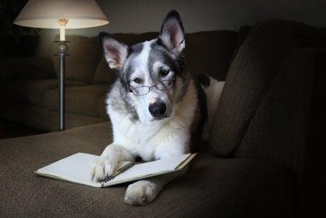 Forskere har studert flere vitenskapelige kuriositeter om hunden din.