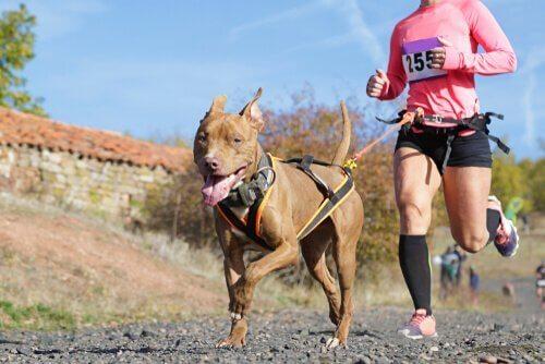 Hva er canicross? – Trening med hunden