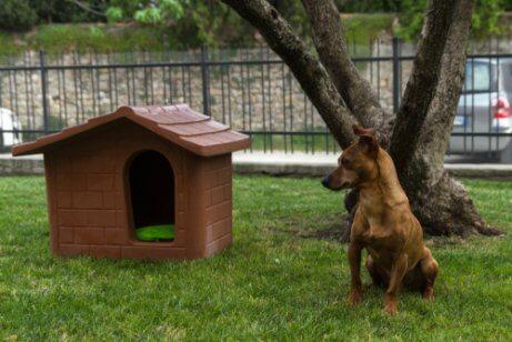 En hund ved siden av et hundehus