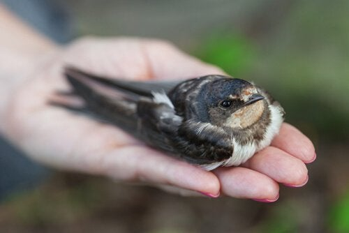 Hvordan vite om en fugl er syk?