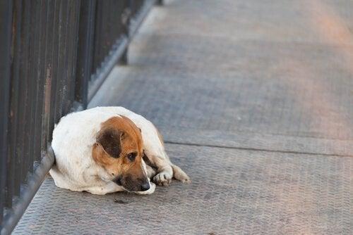 Hva skal du gjøre om du kjæledyret blir savnet?