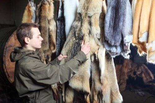 Mann ser på et lager av pels