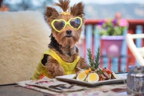 Salatoppskrifter for hunder
