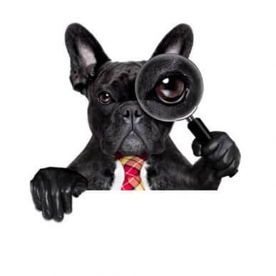 Vitenskapelige kuriositeter om hunder