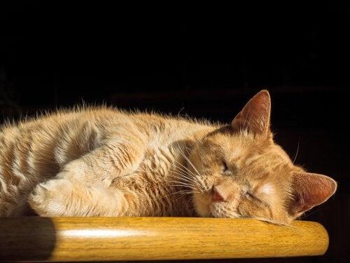 Katter vil kunne oppleve en dyp for for søvn på samme måte som oss mennesker.