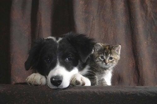 Bilde av en valp og en kattunge.