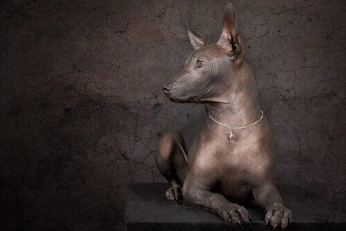 4 store kunstverk med hunder i seg