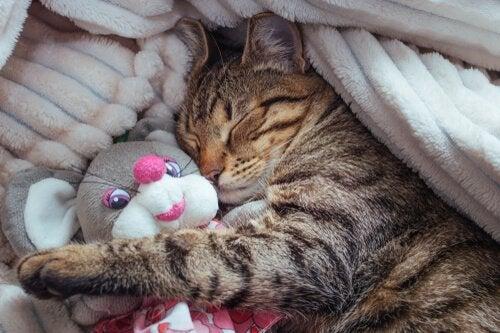 En forklaring av kattenes ulike søvnetapper