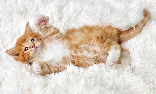 En rød liten kattunge ligger på teppe.