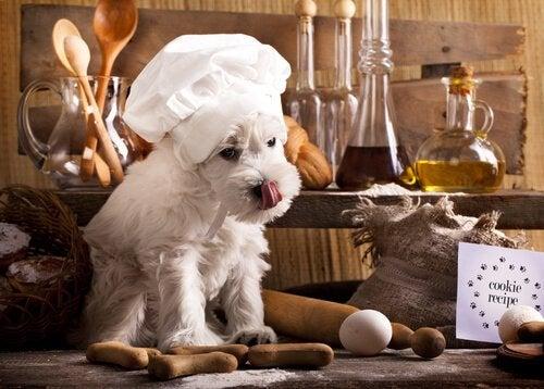 3 oppskrifter for hunder som følger en BARF-diett