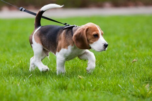 Slik kan du holde hunden rolig på tur