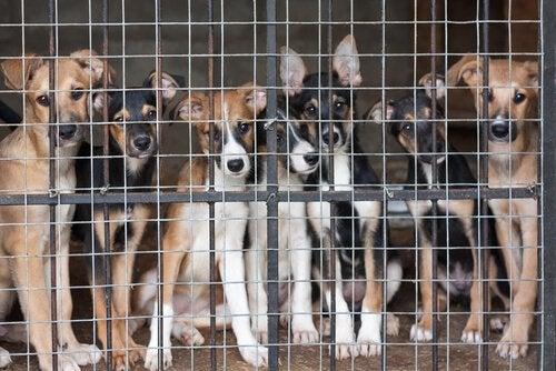 Hjemløse hunder i bur venter på et nytt hjem.