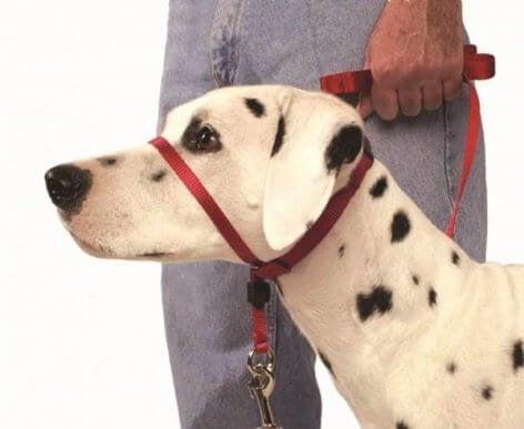 Snuteseler for hund: Hvordan bruke disse på en korrekt måte