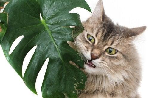 Hvilke er de giftigste plantene for kjæledyr?
