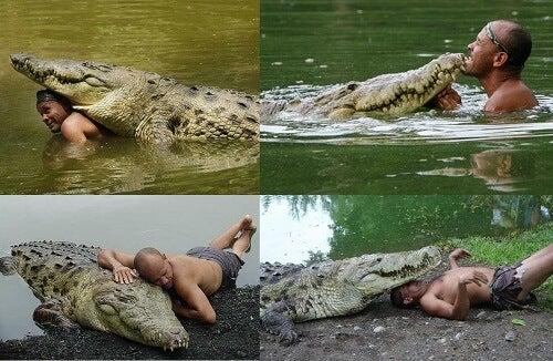 Det overraskende vennskapet mellom et menneske og en krokodille