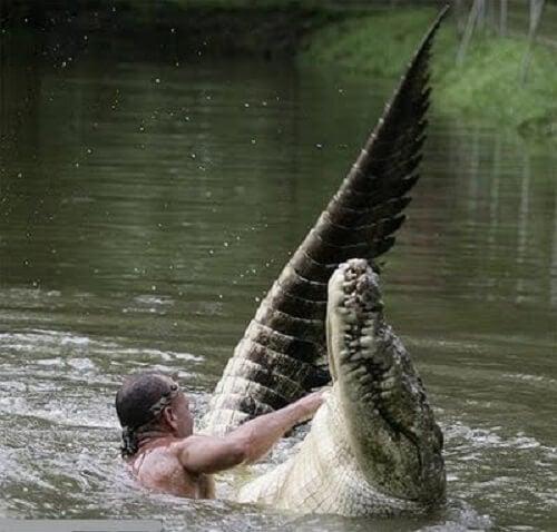 Krokodillen bader