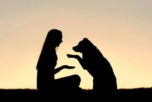 Hva vil det si å lære opp en hund ved hjelp av positiv forsterkning?