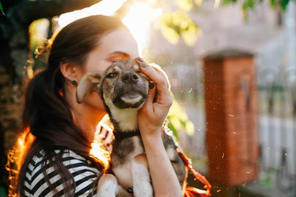 Lykkelig liten hund blir hold i armene til en kvinne.