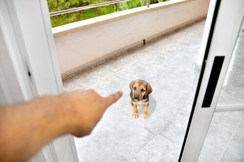 En person skjenner på en trist hund.