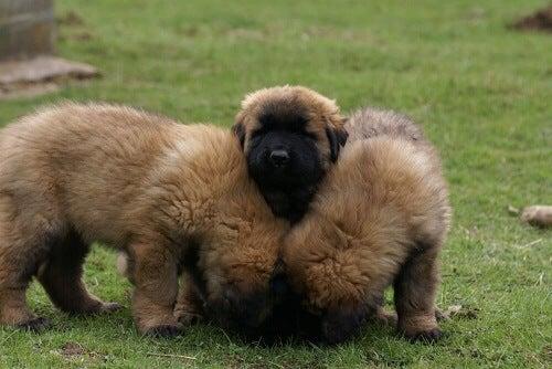 Tre hunder