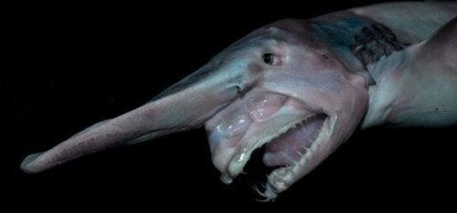Bli kjent med nesehaien: Habitat og fakta
