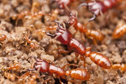 Verdens mest dødelige insekter