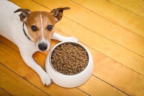 Hund synes maten er kjedelig